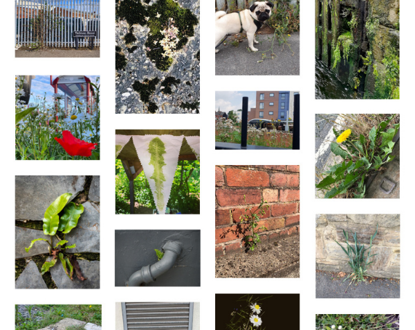 A gallery of images of plants in urban settings